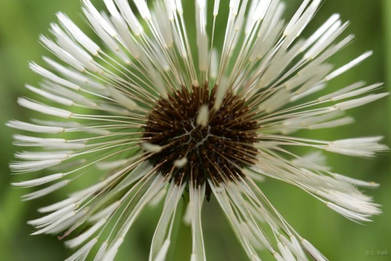 Wildblumen ( Sammelthread) Gerend16