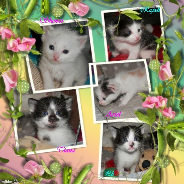 5 Chatons adorables à l'adoption (27) Babas311