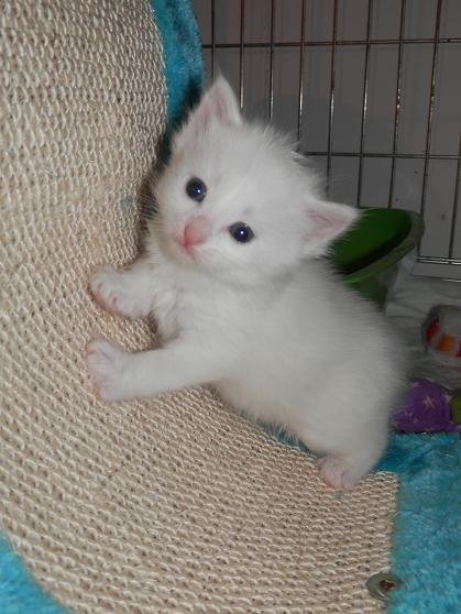5 Chatons adorables à l'adoption (27) P5120511