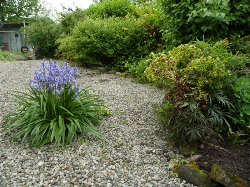 Le coin jardin - Page 3 Facati11