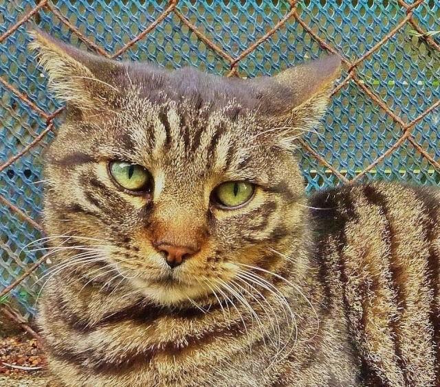 Perdu chat roux sur le Campus de Beaulieu (Mai 2013) Image_10