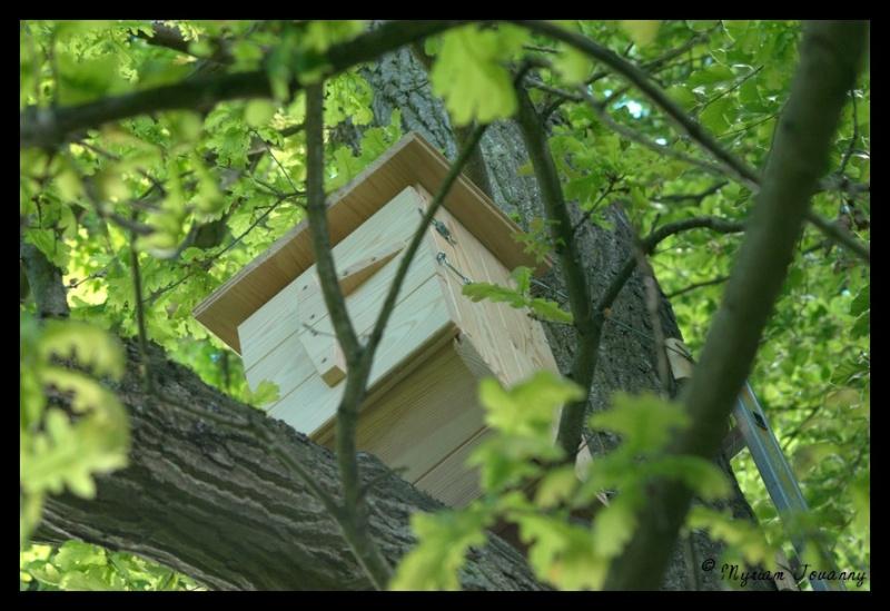 Vos nichoirs à frelons in-situ _igp0616