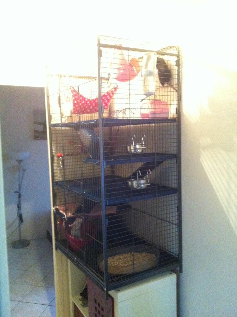 Vend cage  Img_4310