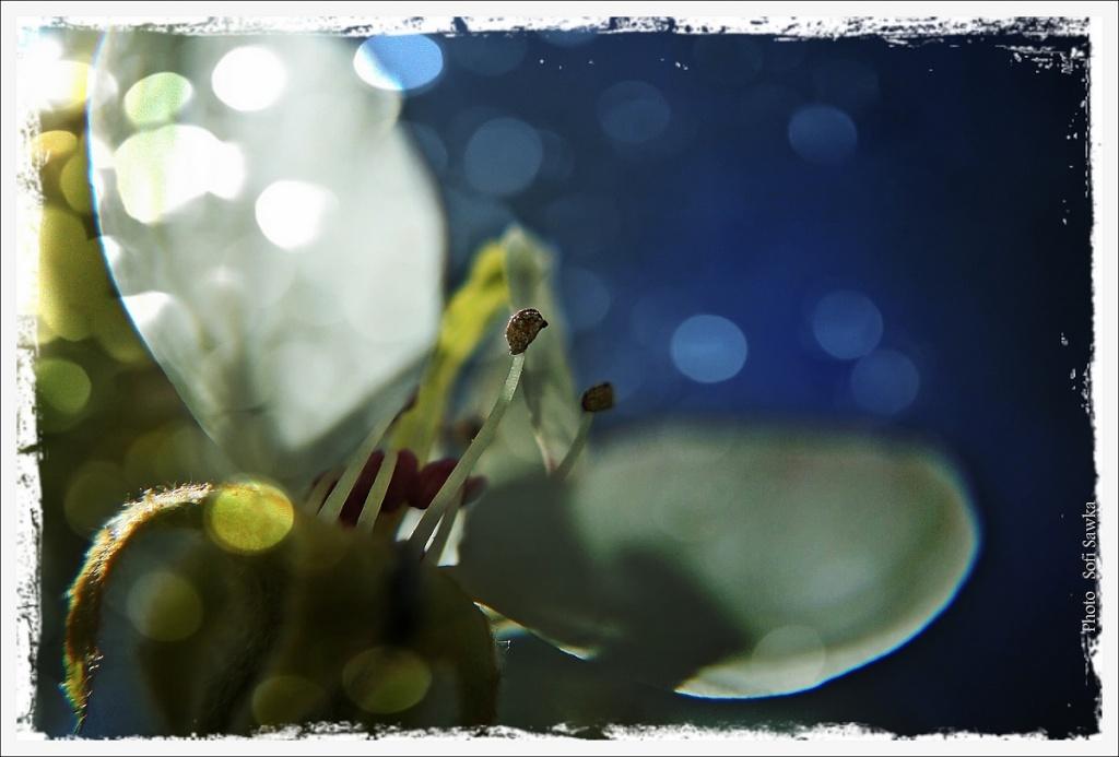 bleu nuit  Fleurr10