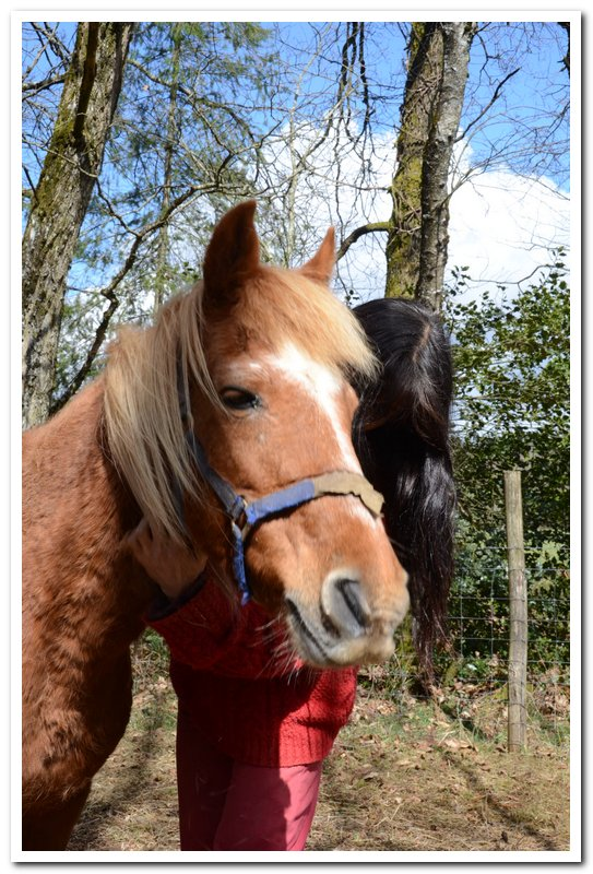 CALINE - poney FS née en 1990 - adoptée en septembre 2013 - Caline11