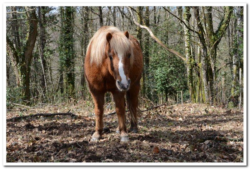 CARAMEL dit GUS - ONC poney né en 1991 - adopté en septembre 2013  Gus2_010