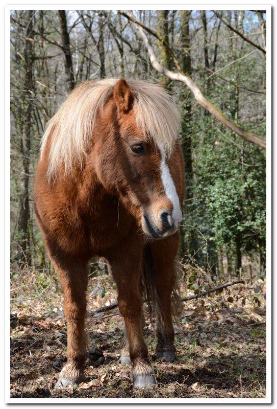 CARAMEL dit GUS - ONC poney né en 1991 - adopté en septembre 2013  Gus4_010