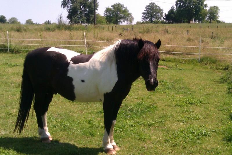 PIRATE - ONC poney né en 2003 - accueilli en refuge en août 2013 Imag0011