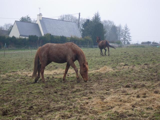 REINE - TF née en 2005 - adoptée en sept 2010 par Aline et Didier - Page 2 Reine10