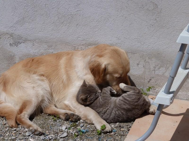 First et le chat Akio P1030113