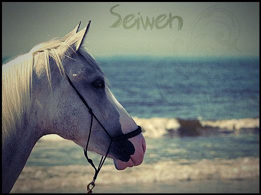 Seiwen
