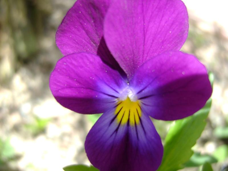 Photo fleur en macro Concou27