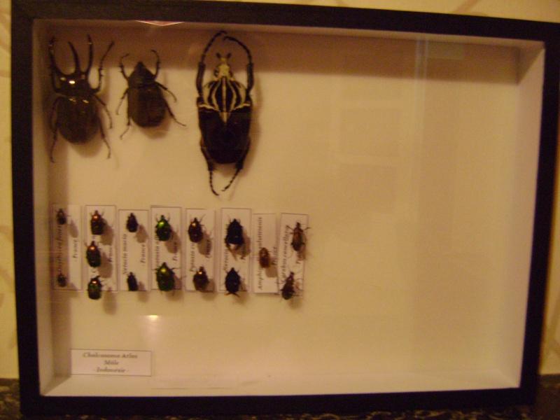 Présentation des collections Entomologiques - Page 6 Insect21
