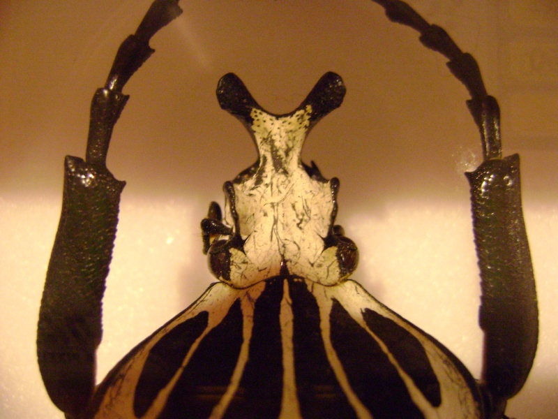 Présentation des collections Entomologiques - Page 6 Insect22