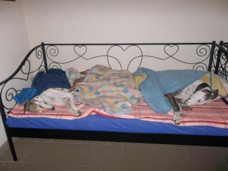 Posture originale pour dormir....et chez vous c'est comment??? - Page 5 Dodo110
