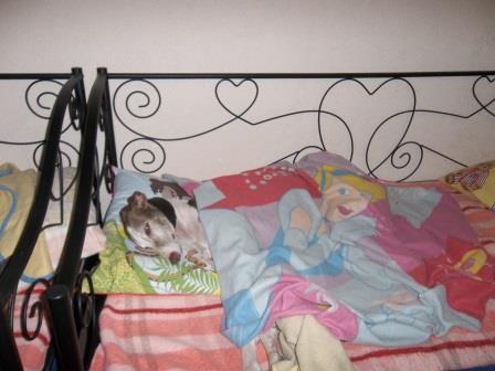 Posture originale pour dormir....et chez vous c'est comment??? - Page 5 Dodo210