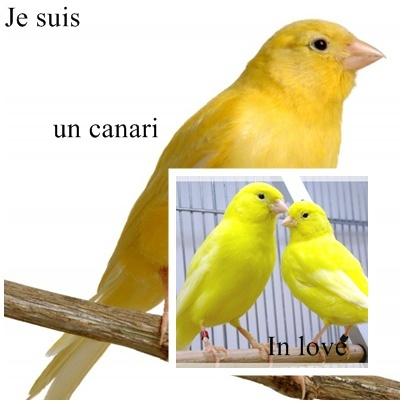 Image Canari10