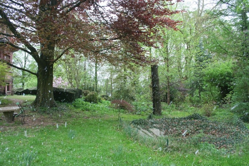 le jardin  - Page 3 Img_8510