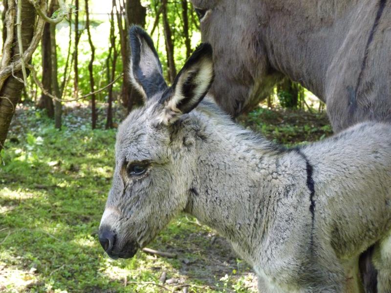 Bébé est enfin né !  P1190711