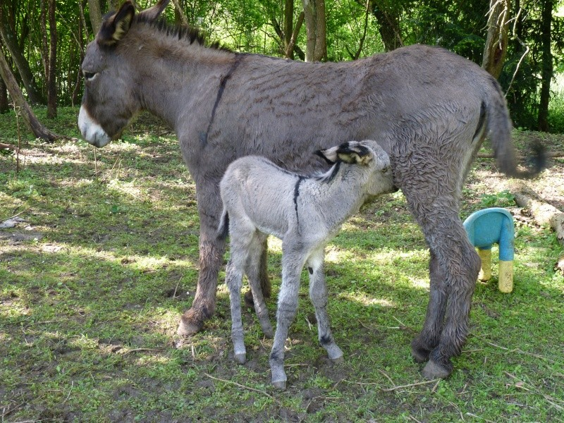 Bébé est enfin né !  P1190712