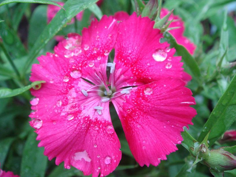 32 - La couleur rose !!! - Page 7 Dsc09827