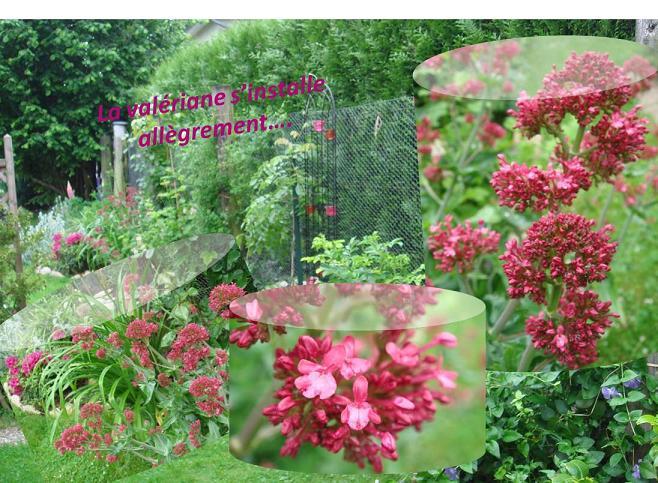 32 - La couleur rose !!! - Page 7 Valari11