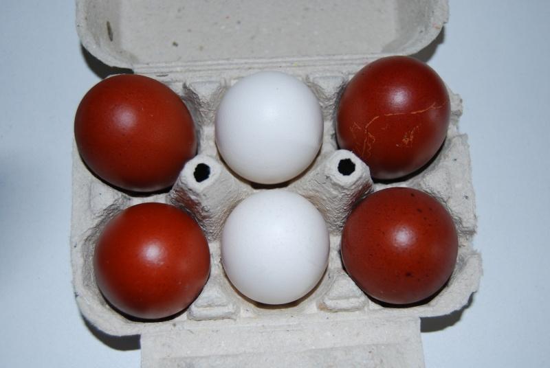Des œufs normaux ! 00110