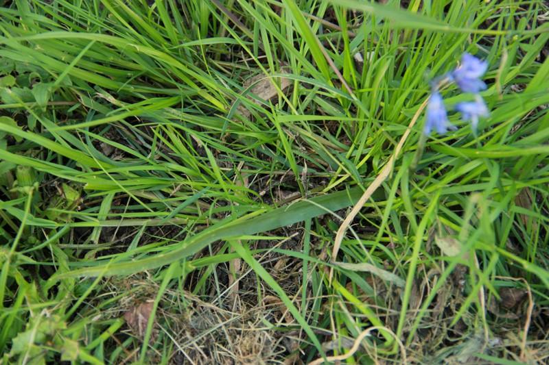 Une inconnue parmi les herbes Inconn12