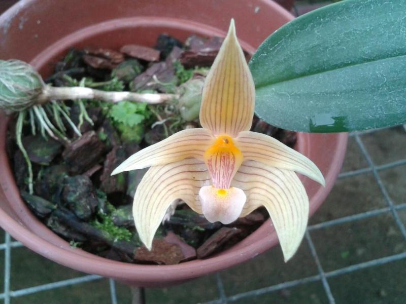 [Photos] Vos Phalaenopsis 91370312