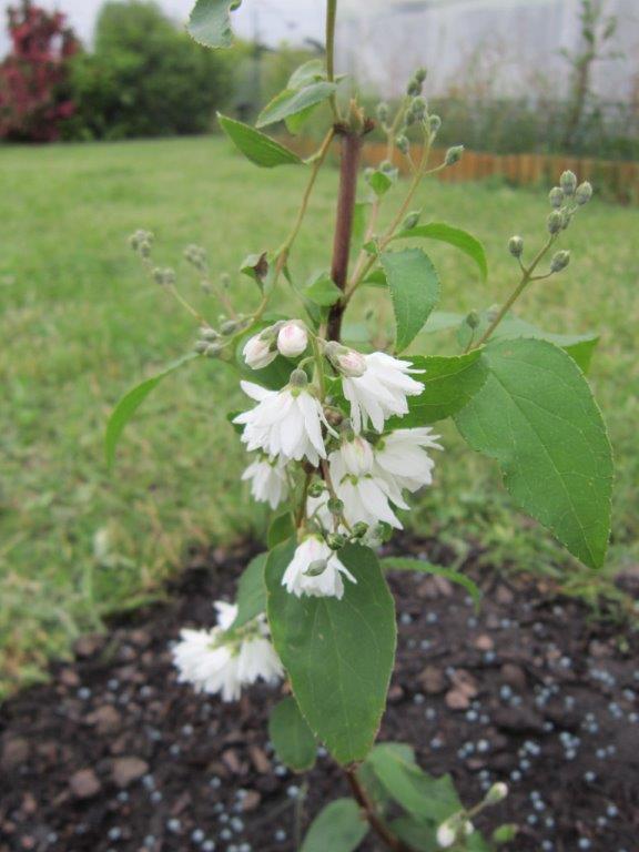 plante a identifier Img_2313