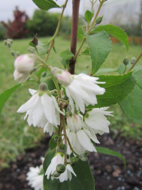 plante a identifier Img_2314