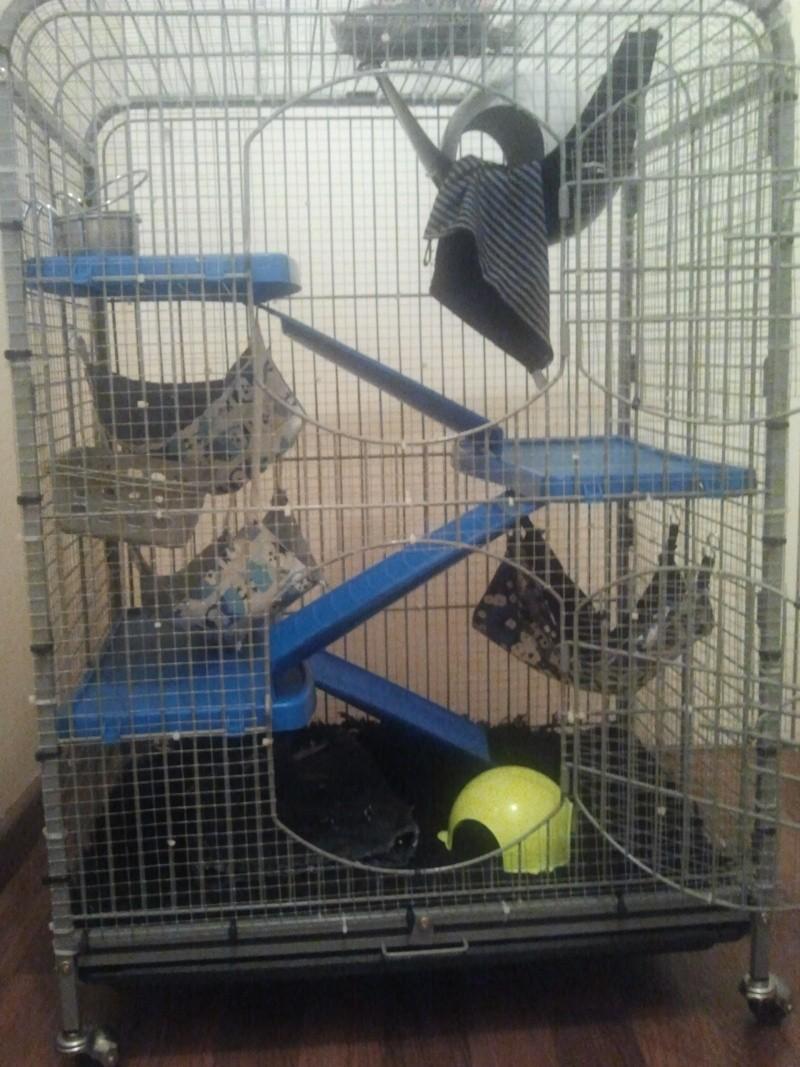 Cage idéale pour 3 rats 2012-110