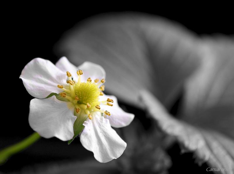 Passer une photo en noir et blanc avec une sélection couleur (CS et Élément) - Page 2 Dsc02211