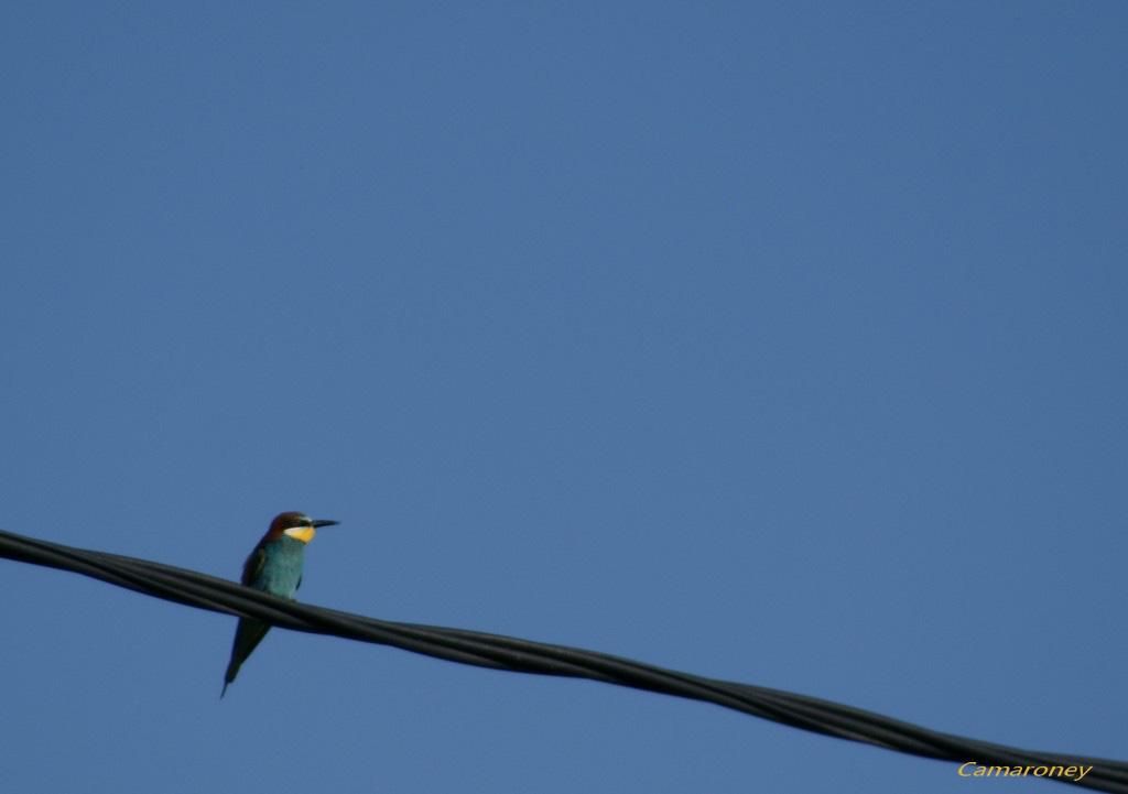 Jolis petits oiseaux... ou grands : 2ème partie - Page 15 Dsc03013