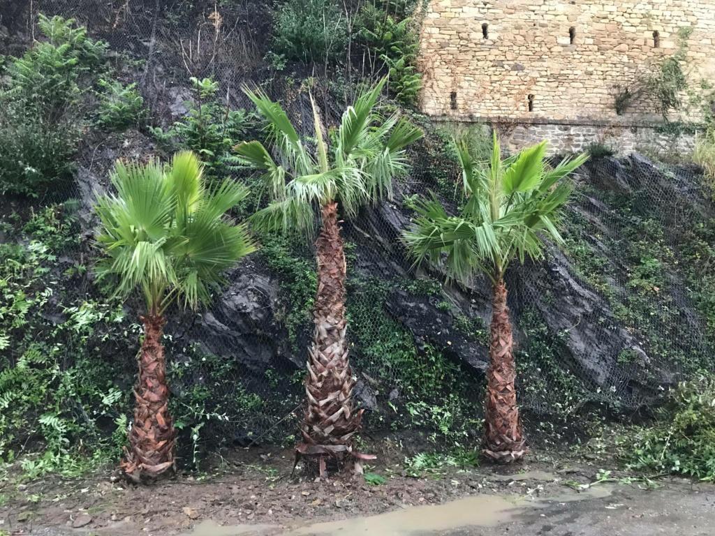 Jardin extraordinaire sur les falaises de Brest 12037110