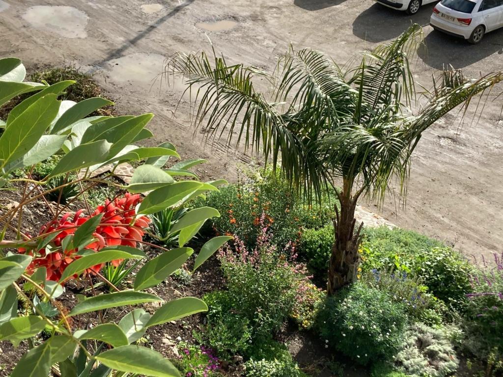 Jardin extraordinaire sur les falaises de Brest 12085810