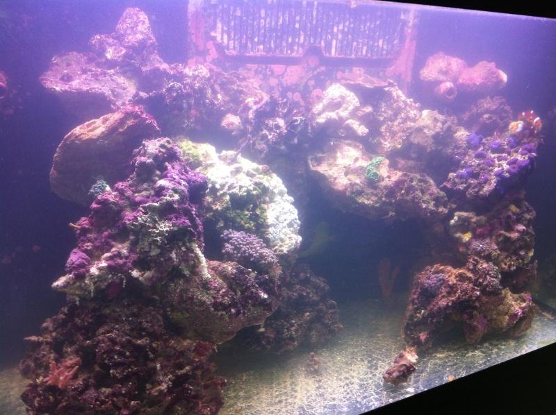 "RSM ""Nemo80"" Img_0014"