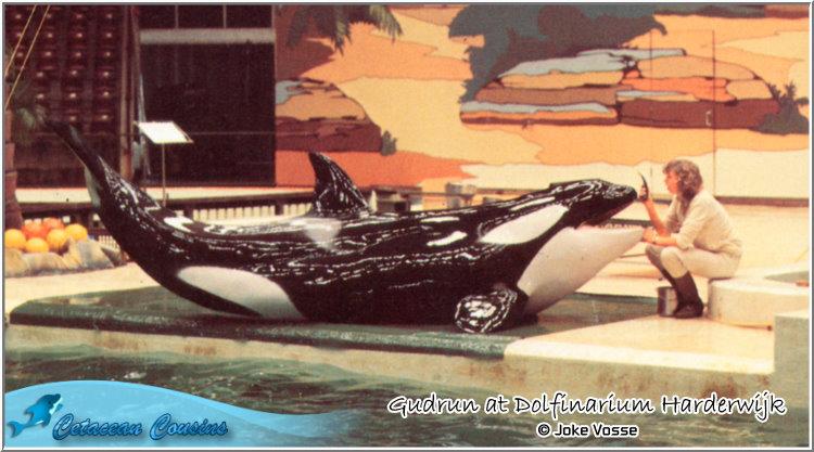 [Photos] Les orques captives quand elles étaient bébé - Page 11 Gudrun11