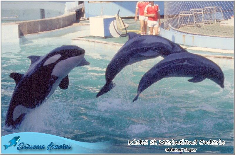 [Photos] Les orques captives quand elles étaient bébé - Page 11 Kiska810