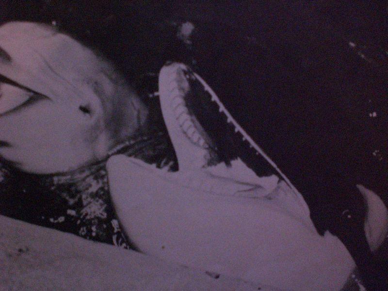 [Photos] Les orques captives quand elles étaient bébé - Page 11 Ruka510
