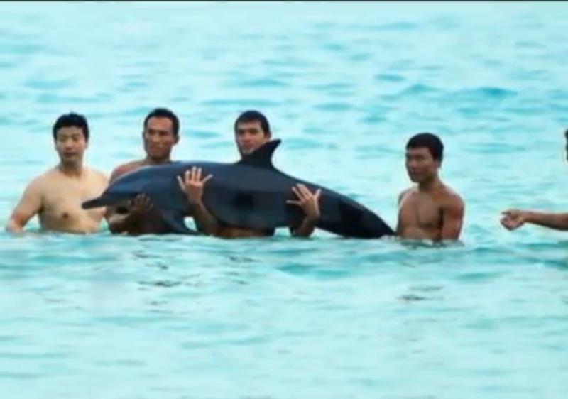 Un dauphin meurt après avoir été manipulé Sans_t12