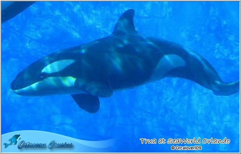 [Photos] Les orques captives quand elles étaient bébé - Page 11 Trua0510