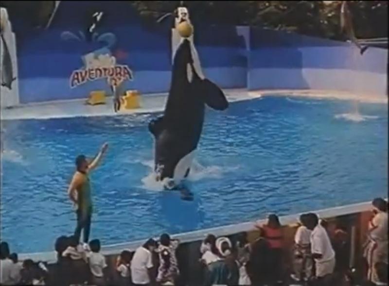 [Photos] Les orques captives quand elles étaient bébé - Page 11 Young_16