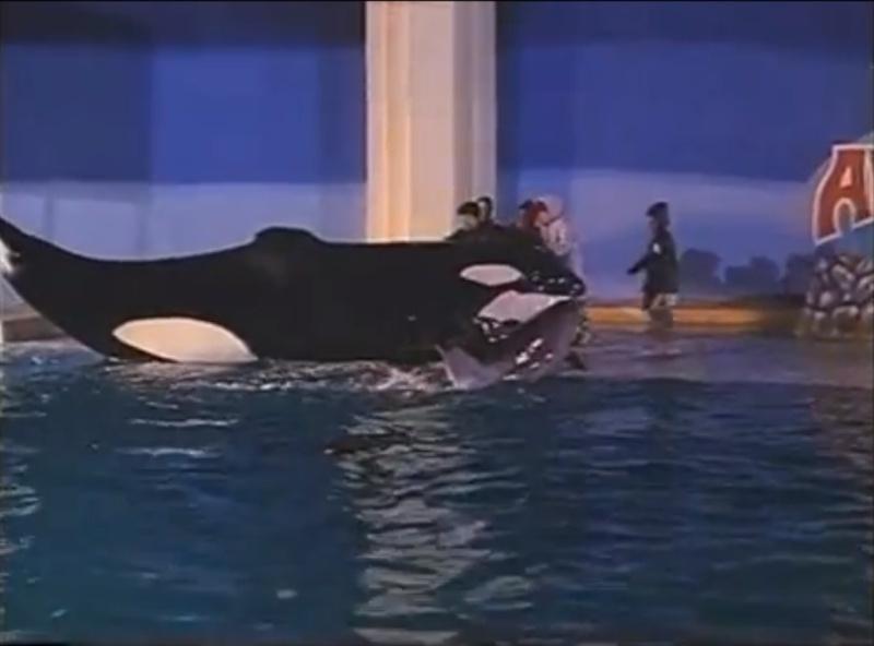 [Photos] Les orques captives quand elles étaient bébé - Page 11 Young_17