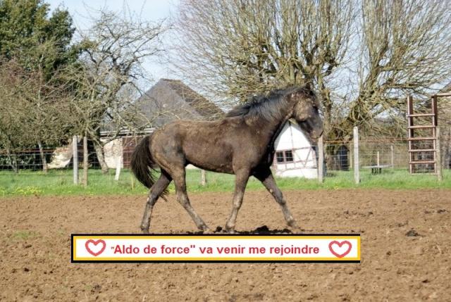 Aldo de Force & Arkema (Avril 2013/ dec 2019) Aldo1114
