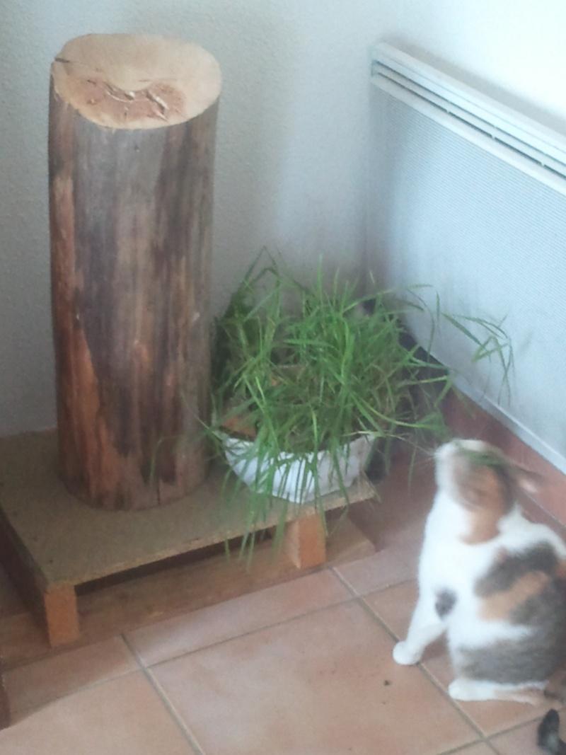 un petit coin de nature dans un appartement Img_2010
