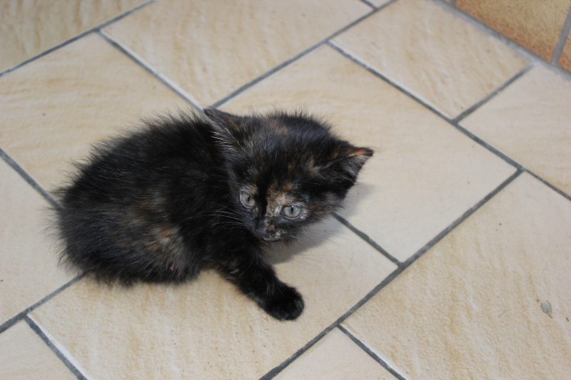 Urgent - petit chaton handicapé, non sevré trouvé dans la rue Img_0210