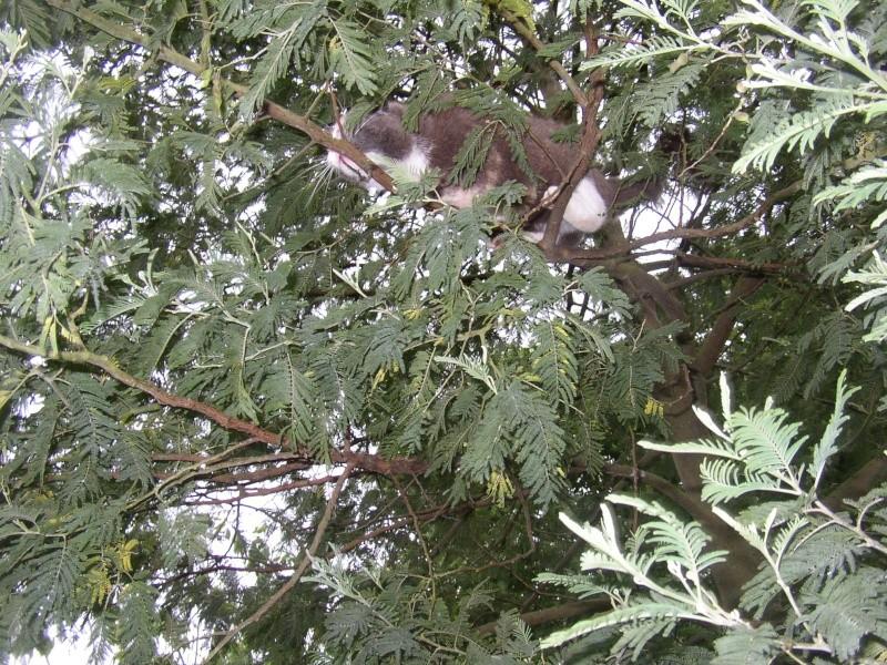 quand chipie fait l'écureuil 12_12_13