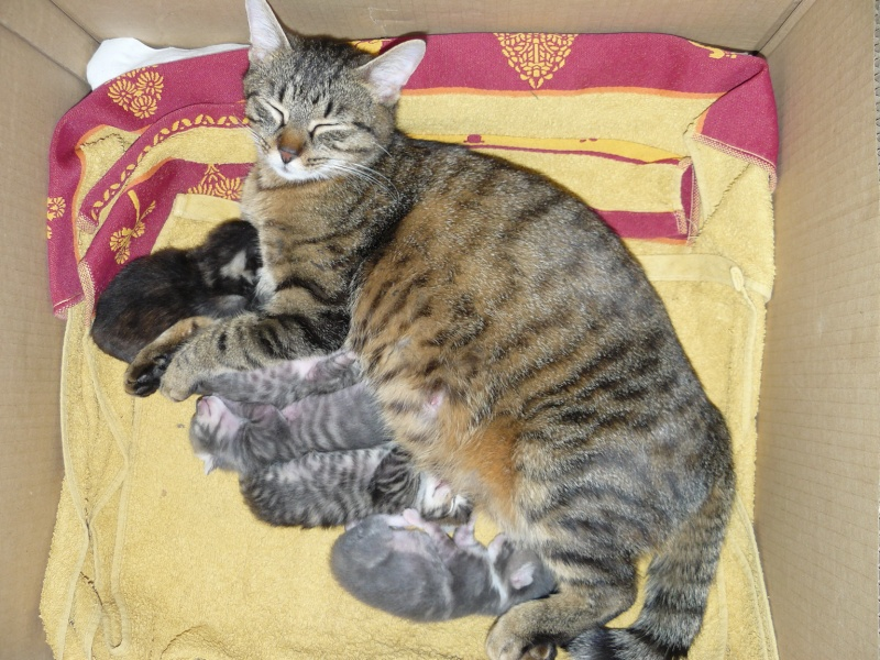 nichée de chatons Chaton10