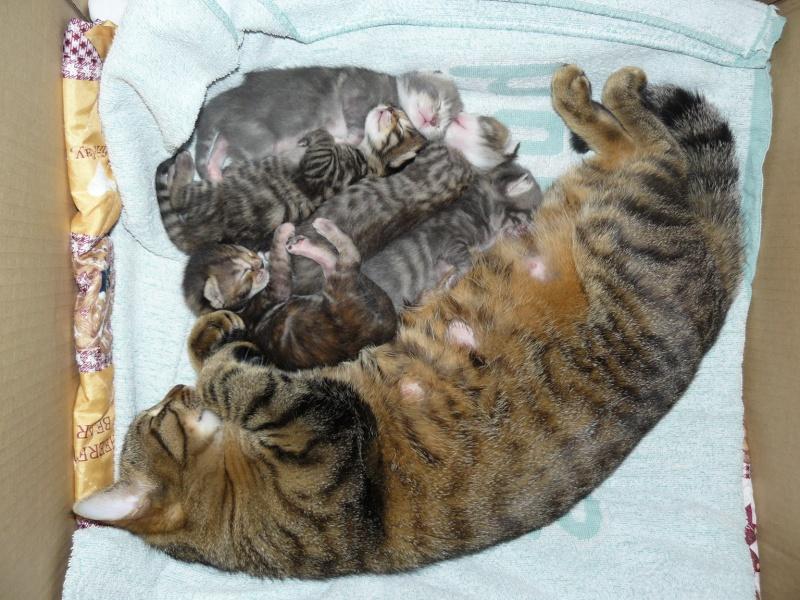 nichée de chatons Chaton11